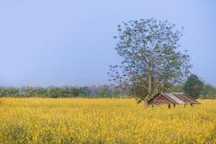 Kolor żółty chałupa i kwiaty Obrazy Stock