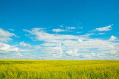 Kolor żółty gwałci kwiaty na niebieskim niebie z chmurami i polu Fotografia Royalty Free