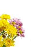 Kolor żółty i menchii kwiaty Zdjęcie Royalty Free