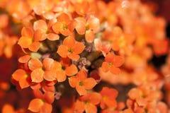 Kolor żółty i pomarańczowy malutki kwiatu bukiet w zakończenie up szczególe obrazy stock