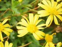 Kolor żółty i zieleń Fotografia Stock