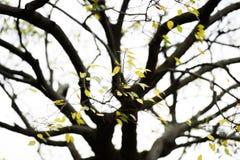 Kolor żółty jesienni liść Zdjęcia Stock