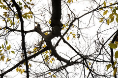 Kolor żółty jesienni liść Zdjęcie Stock