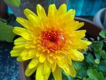 Kolor żółty jest mój colour Obrazy Royalty Free