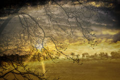 Kolor żółty krajobraz Zdjęcie Royalty Free