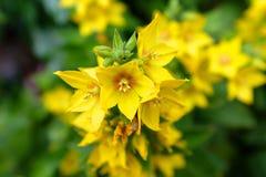 Kolor żółty kwiaty Obrazy Royalty Free