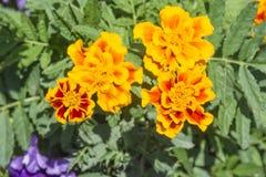 Kolor żółty kwiaty Fotografia Stock