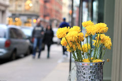 Kolor żółty kwiaty Zdjęcia Royalty Free