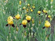 Kolor żółty kwiaty Zdjęcie Stock