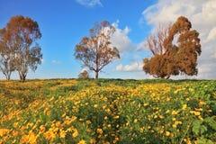 Kolor żółty kwiaty i suszą trzy drzewa Zdjęcie Royalty Free
