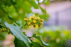 Kolor żółty kwiaty Wąska ostrość Zdjęcie Stock