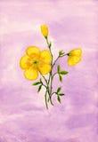 Kolor żółty kwitnie akwarelę Zdjęcia Royalty Free
