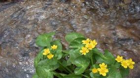 Kolor żółty kwitnie blisko zatoczki zdjęcie wideo