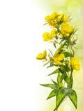 Kolor żółty kwitnie kwiecistą granicę Zdjęcia Stock