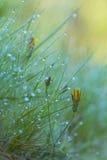 Kolor żółty kwitnie między zielonymi ziele Zdjęcia Stock