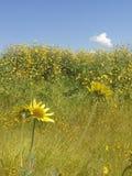 Kolor żółty kwitnie morze Zdjęcie Royalty Free