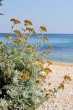 Kolor żółty kwitnie na plaży Fotografia Royalty Free