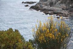 Kolor żółty kwitnie na skalistym seashore zdjęcia stock