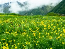 Kolor żółty kwitnie na tle góry obraz royalty free