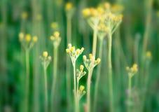 Kolor żółty kwitnie na zielonym tle Zdjęcie Royalty Free