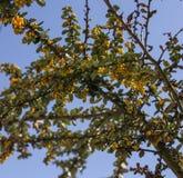 Kolor żółty kwitnie przeciw niebieskiemu niebu, lekki i jaskrawy obraz stock