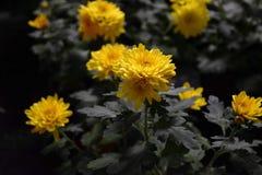 Kolor żółty kwitnie w lesie obrazy royalty free