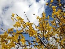 Kolor żółty kwitnie w wiośnie Obrazy Stock