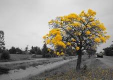 Kolor żółty lub szarość Obraz Stock