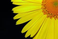 Kolor żółty na czerni Obrazy Stock