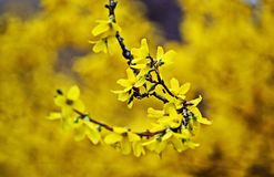 Kolor żółty na kolor żółty Obraz Royalty Free