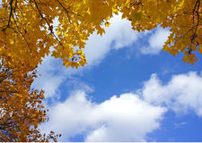 Kolor żółty opuszcza niebieskie niebo jesień Fotografia Stock