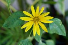 Kolor żółty podąża Zdjęcie Royalty Free