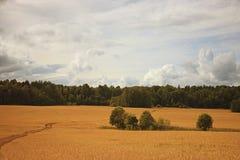 Kolor żółty pola krajobraz Obraz Royalty Free