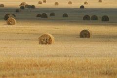 Kolor żółty pola krajobraz Obrazy Royalty Free