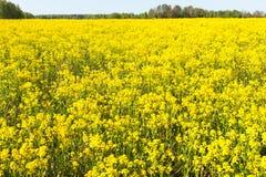 Kolor żółty pole Zdjęcie Royalty Free