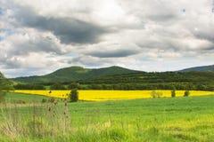 Kolor żółty pole Zdjęcia Royalty Free