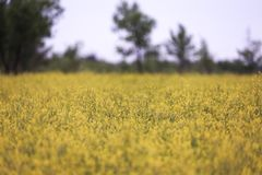 Kolor żółty pole Park Narodowy fotografia royalty free