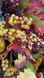 Kolor żółty, pomarańcze, spadków liście zdjęcie stock