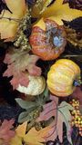 Kolor żółty, pomarańcze, spadków liście obrazy stock