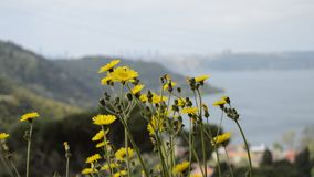 Kolor żółty pszczoły i kwiaty zdjęcie wideo