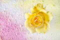 Kolor żółty róża kropił proszek na abstrakcjonistycznym tle wypełniającym z barwionym proszkiem abstrakcjonistycznego tła piękny  Zdjęcie Royalty Free