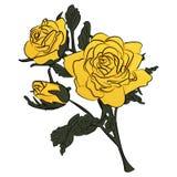 Kolor żółty róża na zielonej trzon ilustraci Zdjęcia Royalty Free