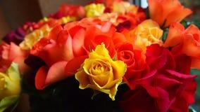 Kolor żółty róża przeciw kwiatu tłu Zdjęcie Royalty Free