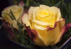 Kolor żółty róża w bukiecie Obrazy Stock