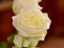 Kolor żółty róża z brązu tłem zdjęcia stock