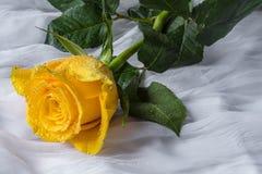 Kolor żółty róża z wod kropel tkaniny tłem Obrazy Royalty Free