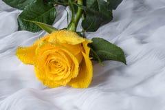 Kolor żółty róża z wod kropel tkaniny tłem Obraz Stock