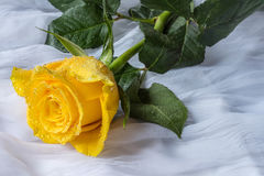 Kolor żółty róża z wod kropel tkaniny tłem Zdjęcia Royalty Free