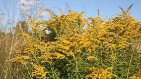 Kolor żółty rośliny w zdjęcie wideo