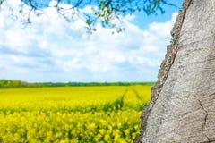 Kolor żółty rośliny z drzewem i niebem Fotografia Royalty Free